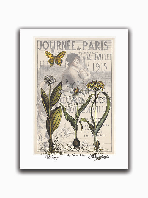 French Botanical Collage Print No. 988-Blank Note Card