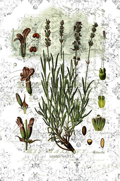 Botanical Print-No. 42