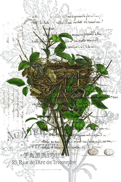 Bird Nest Print-Number 04