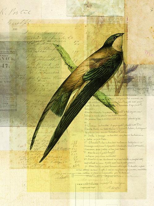 Bird Collage Print No. 129
