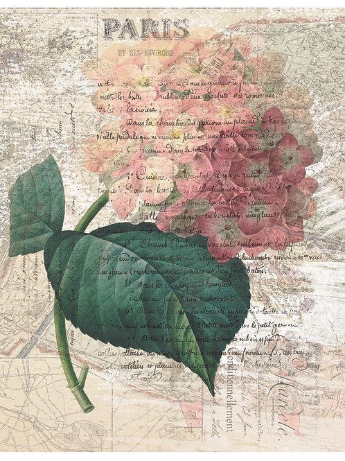 French Botanical Print No. 27
