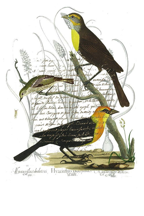 Bird Print No. 03-Blank Note Card