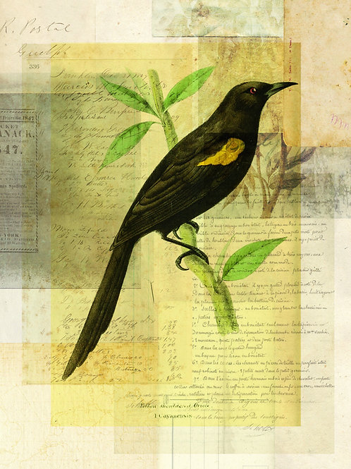 Bird Collage Print-No. 122