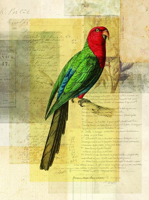 Bird Collage Print No. 125