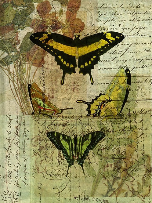 Butterfly Collage No 005