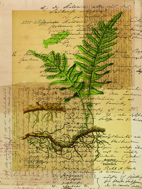 French Fern Printable-No.003