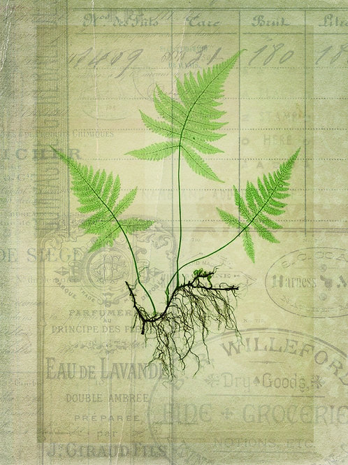 French Fern Printable-No.011