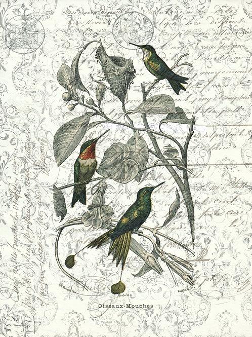 Bird Print No. 1033