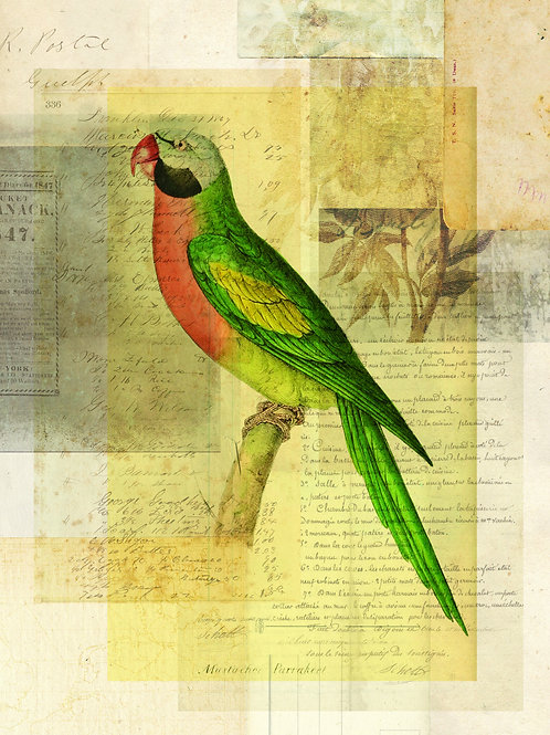 Bird Collage Print No. 120