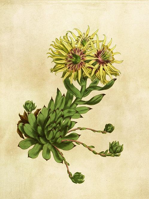 Botanical Printable print No 006
