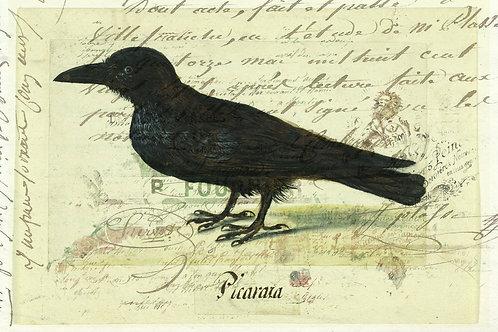 Bird Print No. 33347