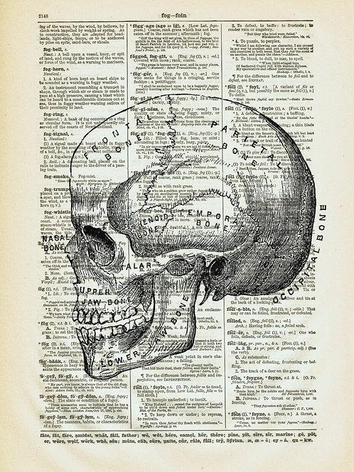 Skull-Vintage Book Page Art Print No. 19