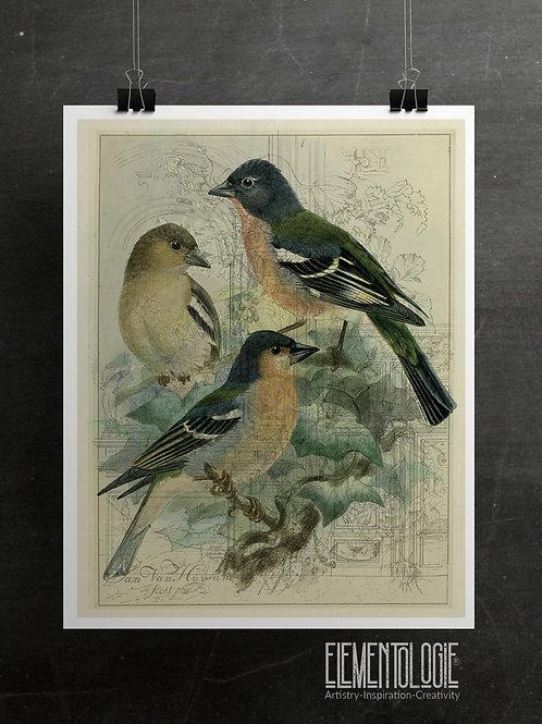 Bird Collage Print-No.33356