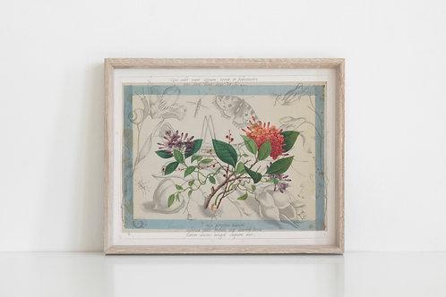 Antique Botanical Collage Print-No.078