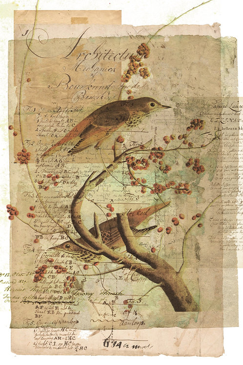 Bird Collage Print-No.0104