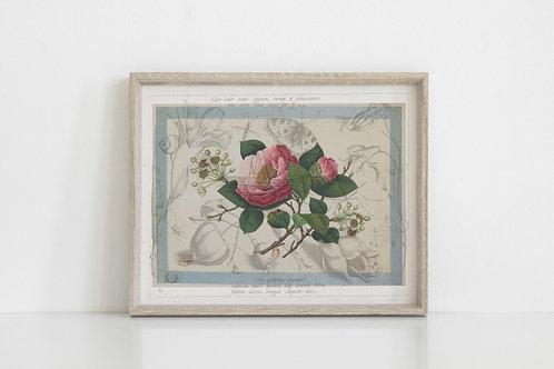 Antique Botanical Collage Print-No.077