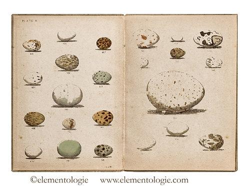 Bird Egg Junk Journal Double Page Sheet- No 123017-Digital Downl