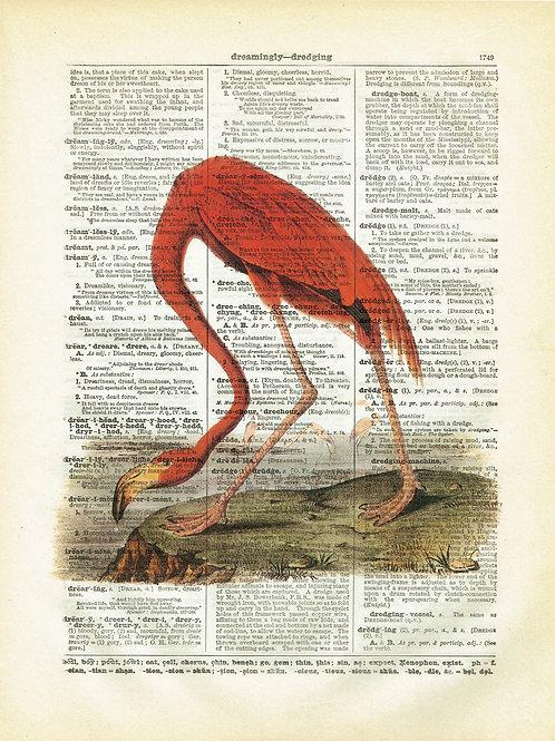 Flamingo-Vintage Book Page Art Print No.09