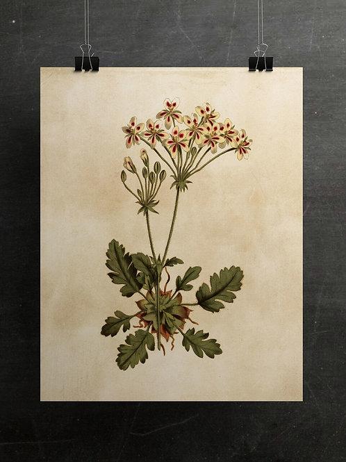 Botanical Print-No. 003