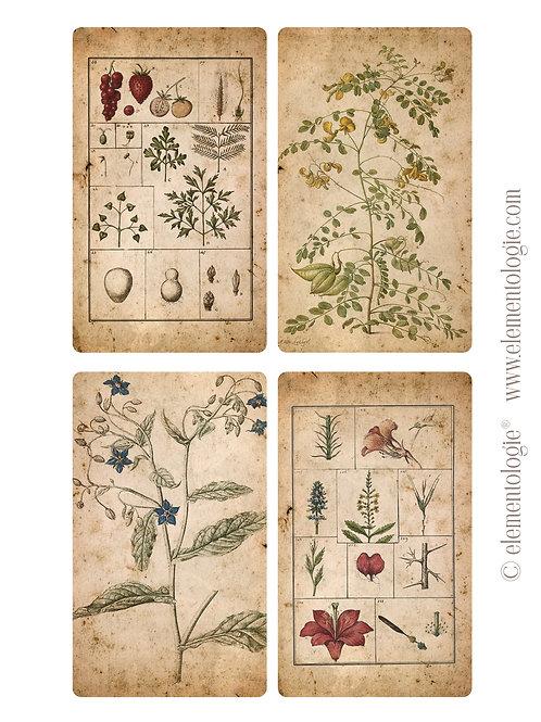 Botanical Journal Cards- No 87205-Digital Download