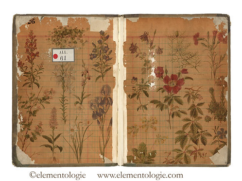 Botanical Junk Journal Double Page Sheet- No 123035-Digital Downl