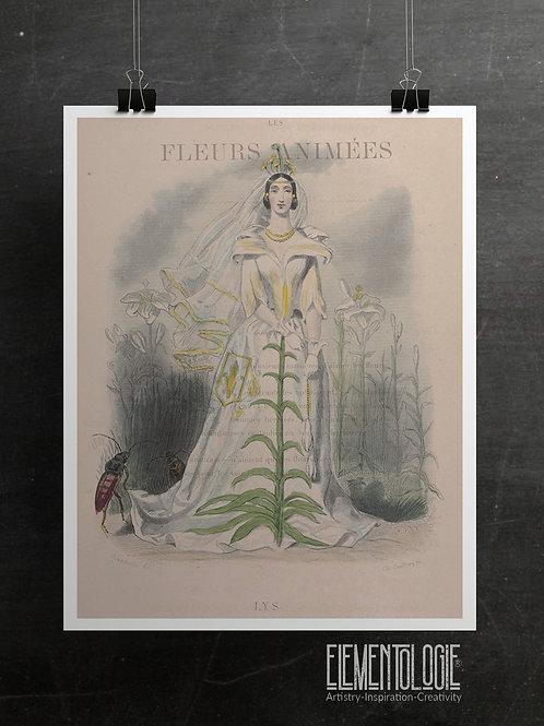 Botanical Printable print No 048