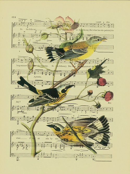 Bird-Vintage Book Page Art Print No. 15