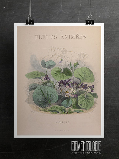 Botanical Printable print No 055