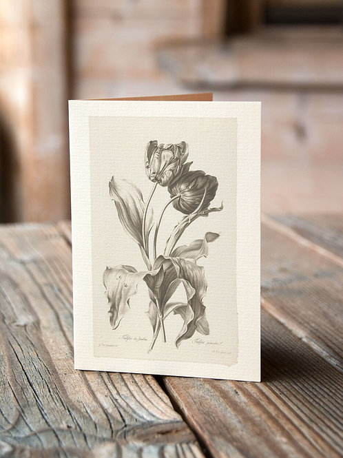 Antique Botanical Collage Print-No.045-Blank Note Card