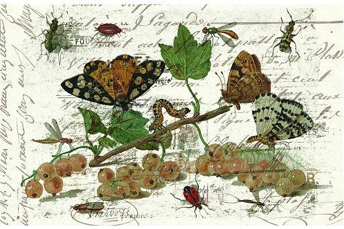 Botanical Printable print No 026