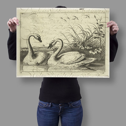Vintage Swan Collage Print-No.66349