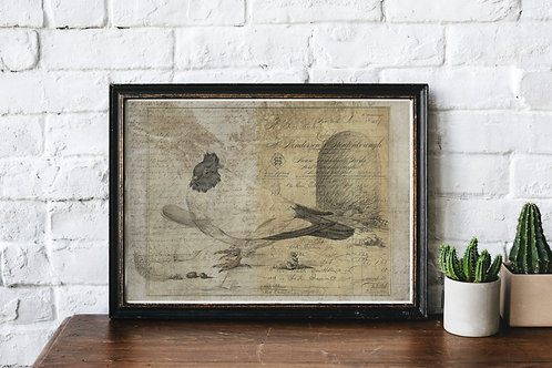 Bird Collage Print-No.33360