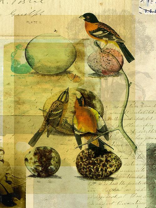 Bird Collage Print No. 011