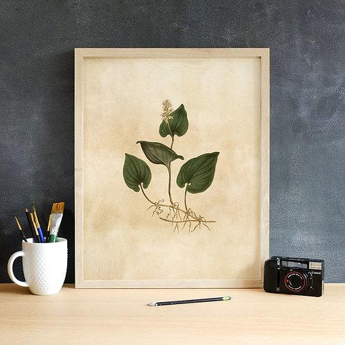 Botanical Print-No. 009