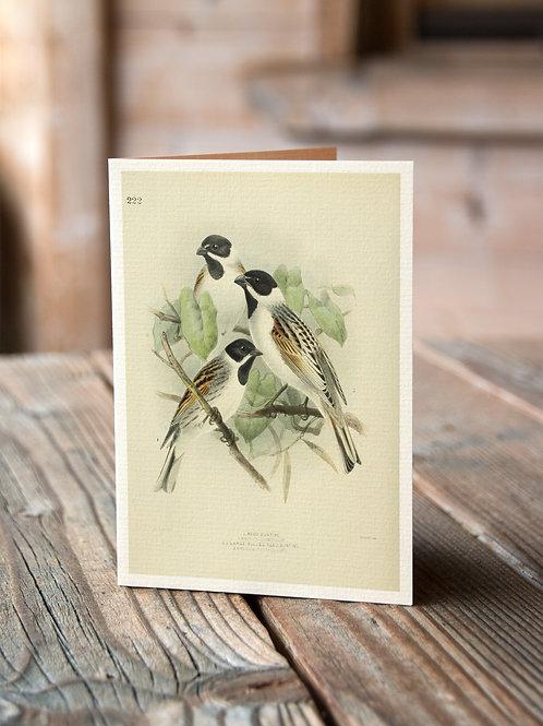 Bird Collage Print-No.33357-Blank Note Card