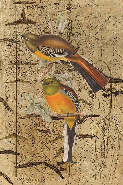Bird Collage Print-No.0716