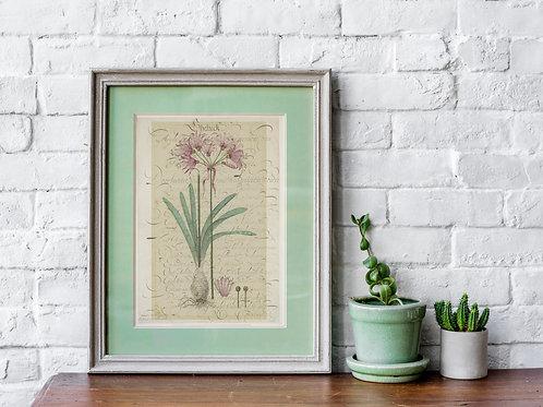 Botanical Printable print No 076