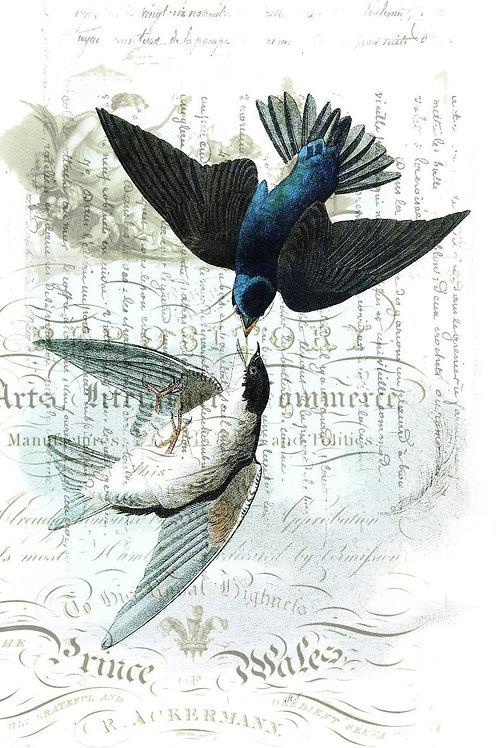 Bird Print No. 010-Blank Note Card
