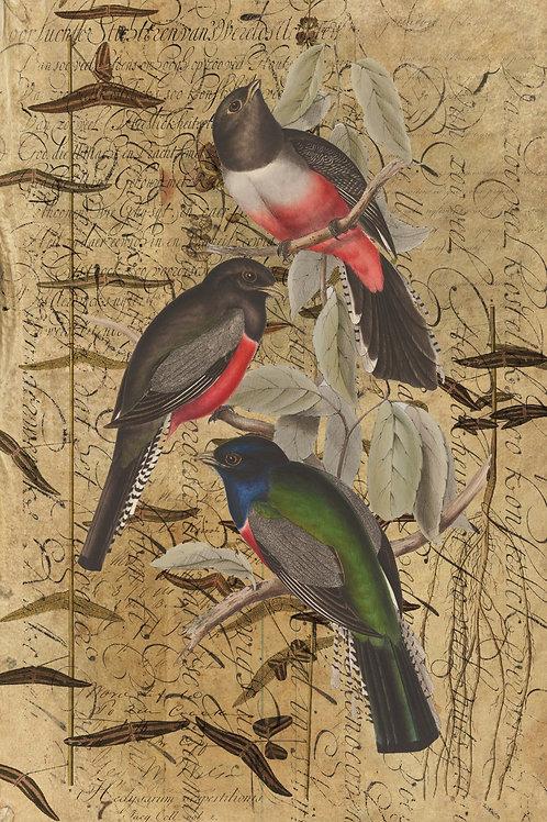 Bird Collage Print-No.0715
