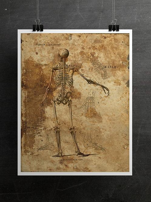 Anatomy Collage Printable No.002
