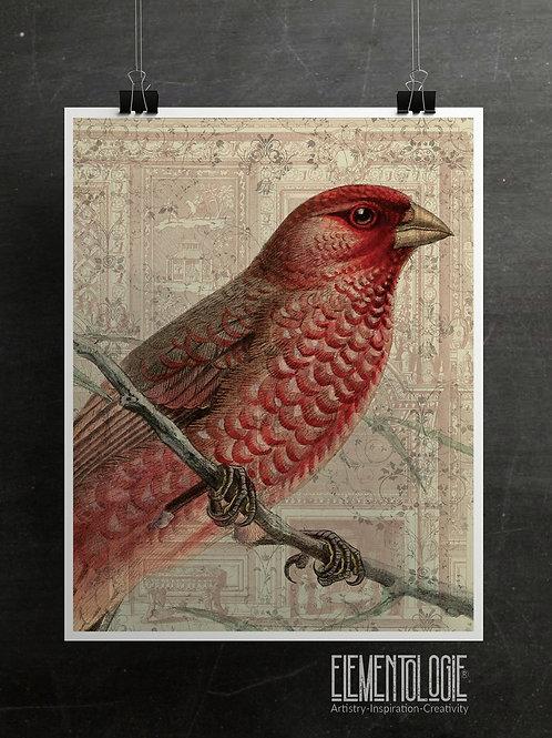 Bird Collage Print-No.33353