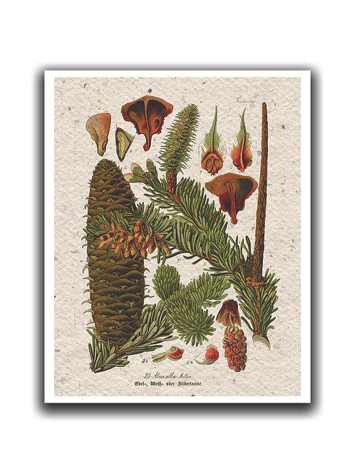 Winter Botanical No.9006- Blank Card