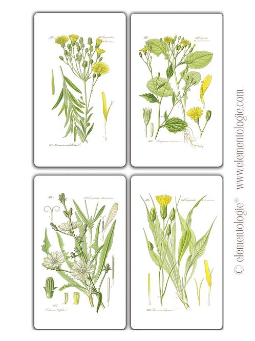 Vintage Botanical Embellishments- No 144-Digital Download