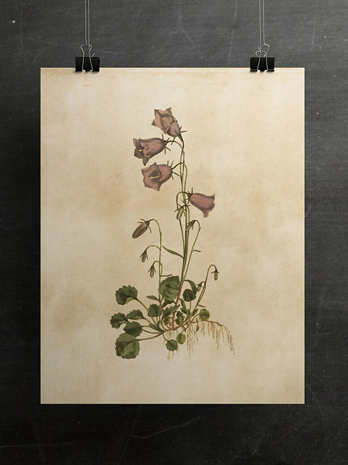 Botanical Print-No. 011