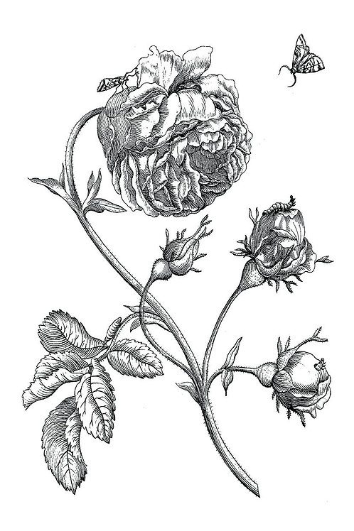 Botanical Print-No. 49