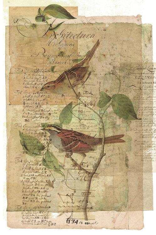 Bird Collage Print-No.0117