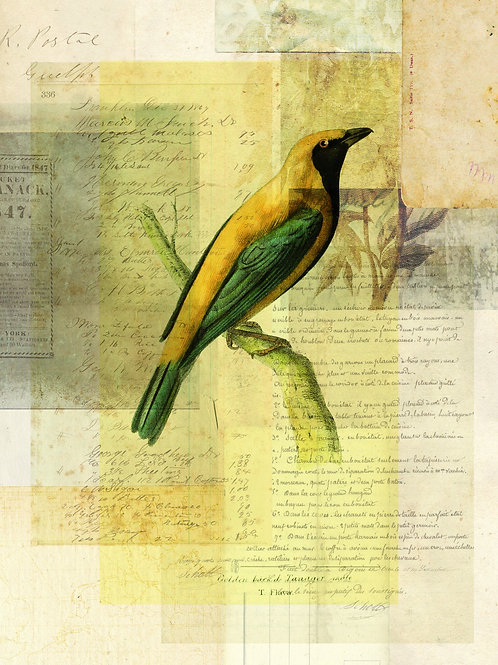 Bird Collage Print-No. 127