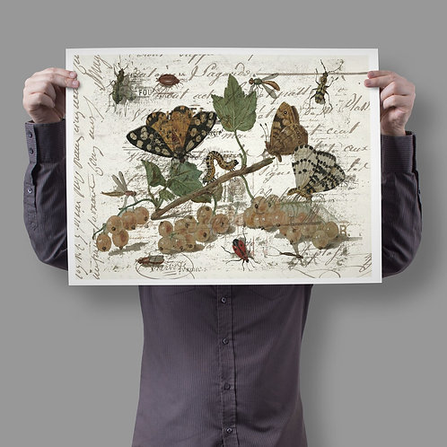 Antique Nature Collage Print-No.026