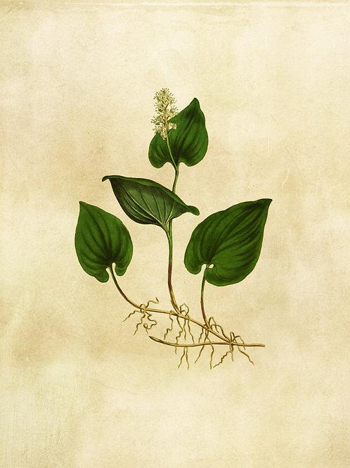 Botanical Printable print No 009