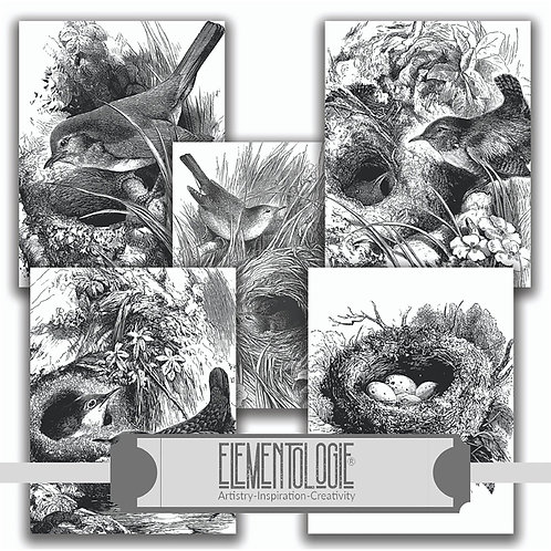 Birds & Nests No.0335-Paper Pack